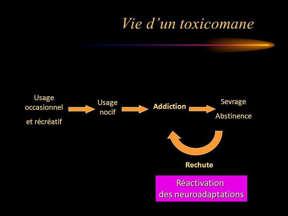 Vie d'un toxicomane Réactivation des neuroadaptations