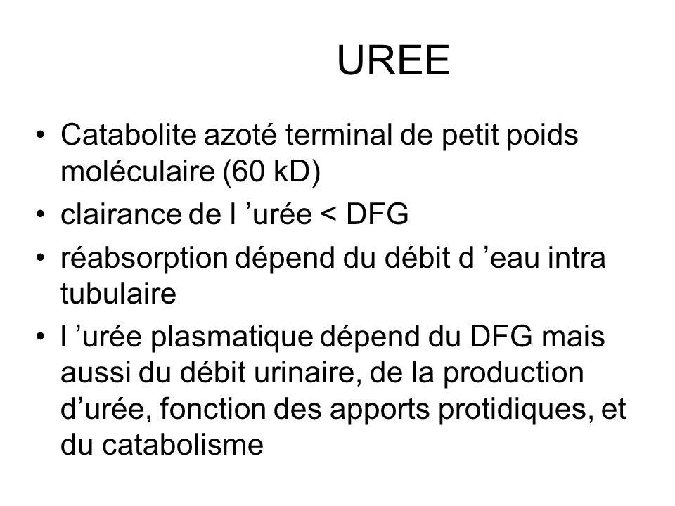 UREE Catabolite azoté terminal de petit poids moléculaire (60 kD)