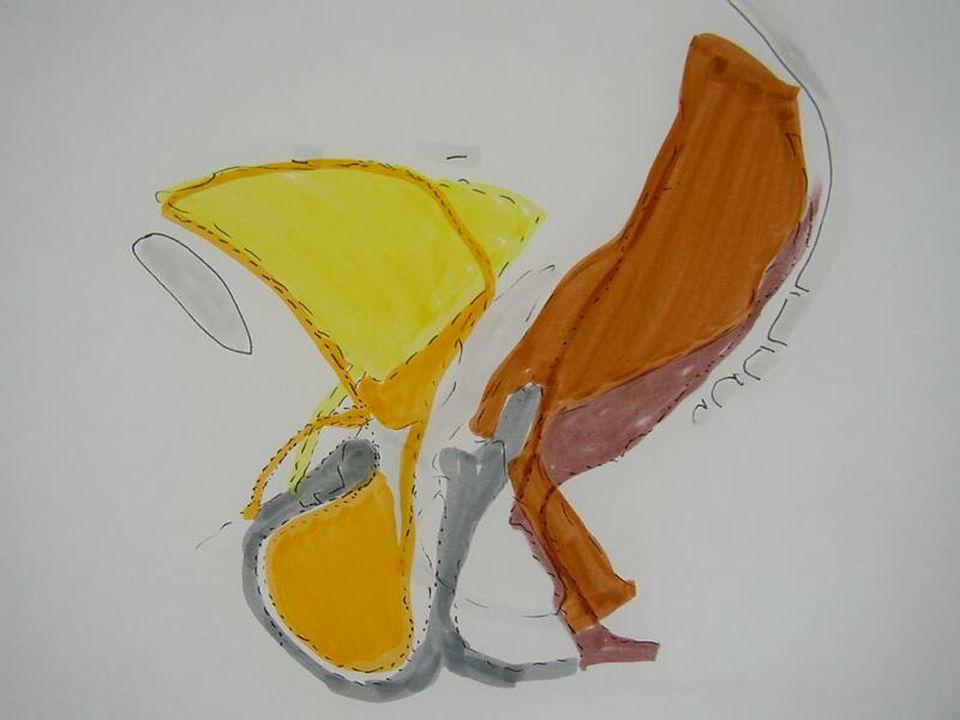 Colpocystogramme : en poussée, au niveau antérieur : cystocèle
