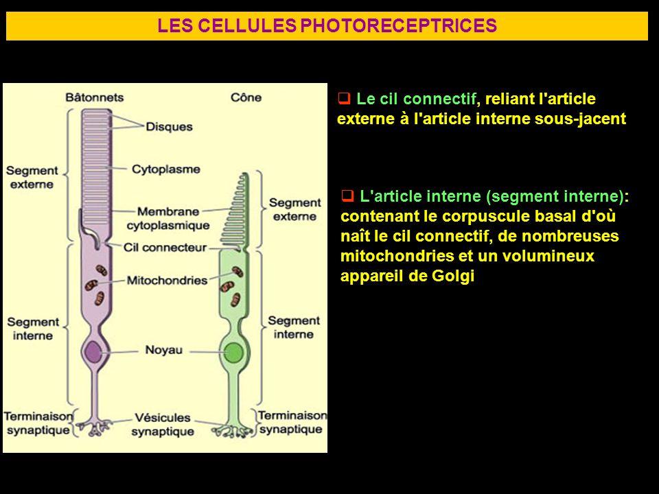 LES CELLULES PHOTORECEPTRICES