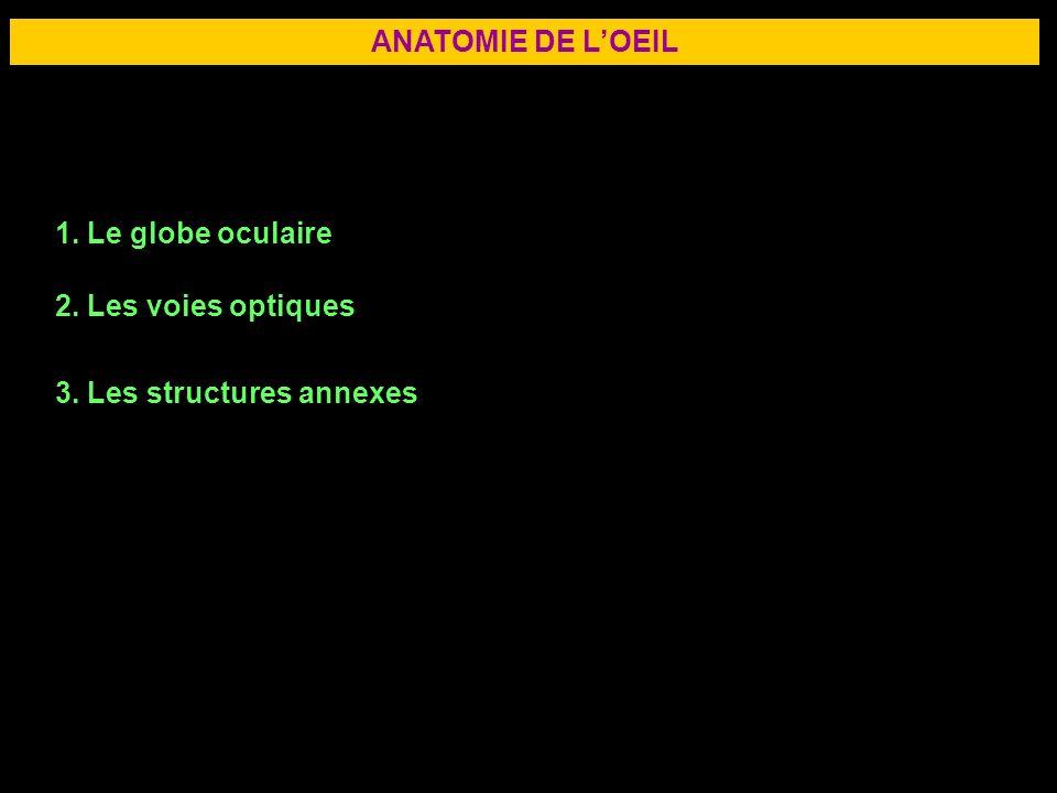 ANATOMIE DE L'OEIL 1. Le globe oculaire 2. Les voies optiques 3. Les structures annexes