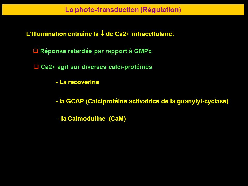 La photo-transduction (Régulation)