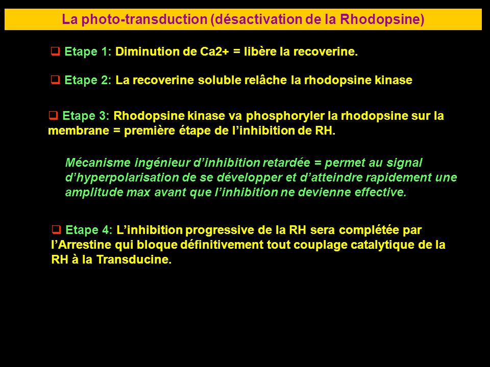 La photo-transduction (désactivation de la Rhodopsine)