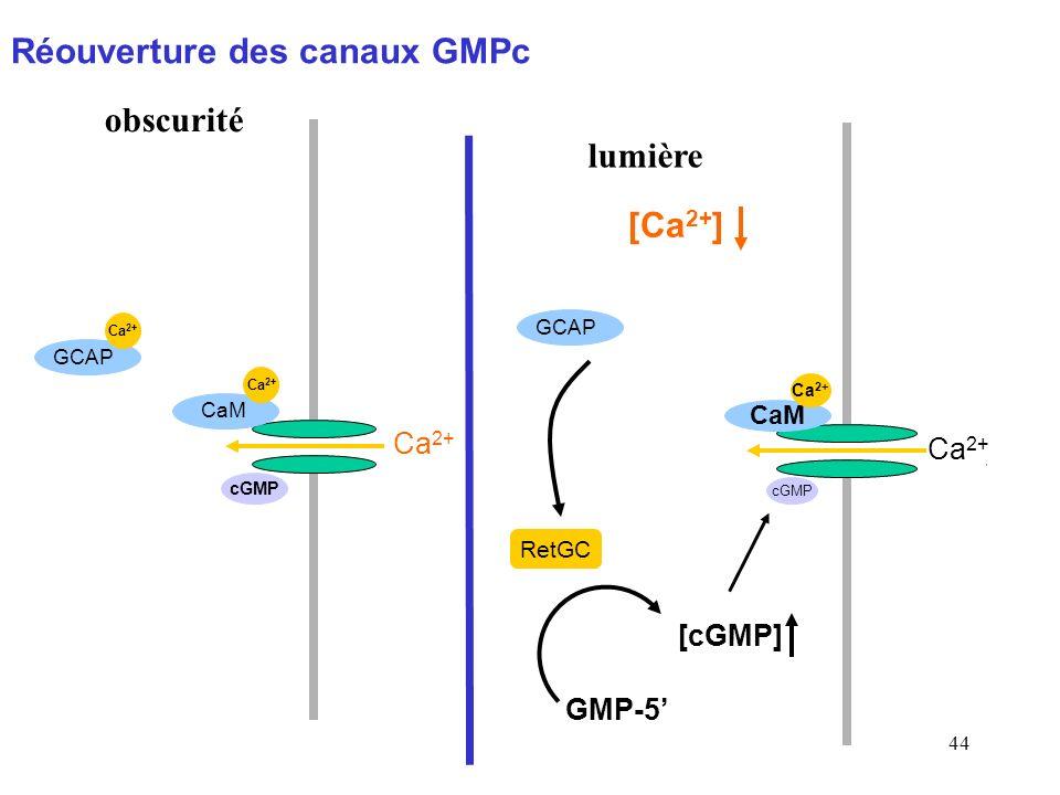 Réouverture des canaux GMPc