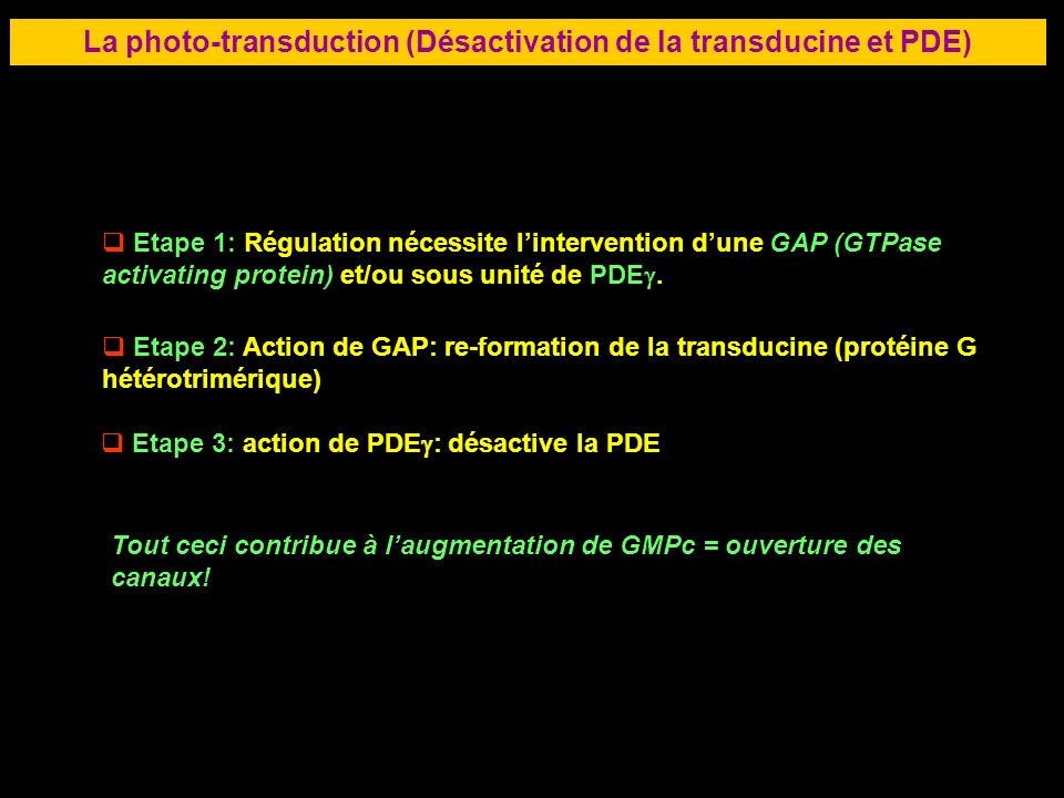La photo-transduction (Désactivation de la transducine et PDE)