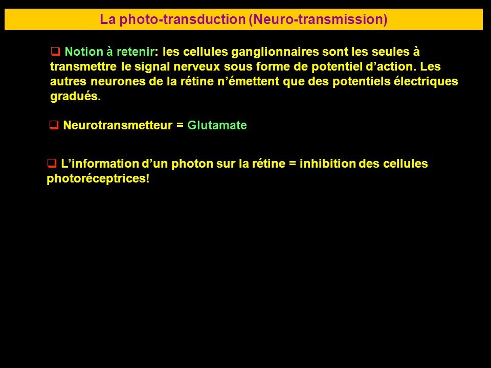 La photo-transduction (Neuro-transmission)