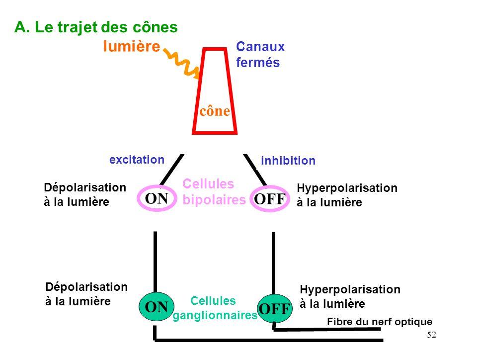 A. Le trajet des cônes lumière cône glutamate ON OFF ON OFF Canaux