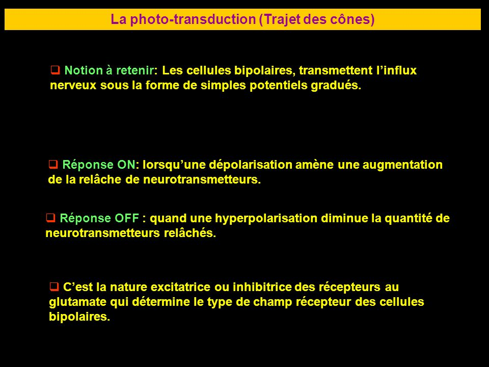 La photo-transduction (Trajet des cônes)