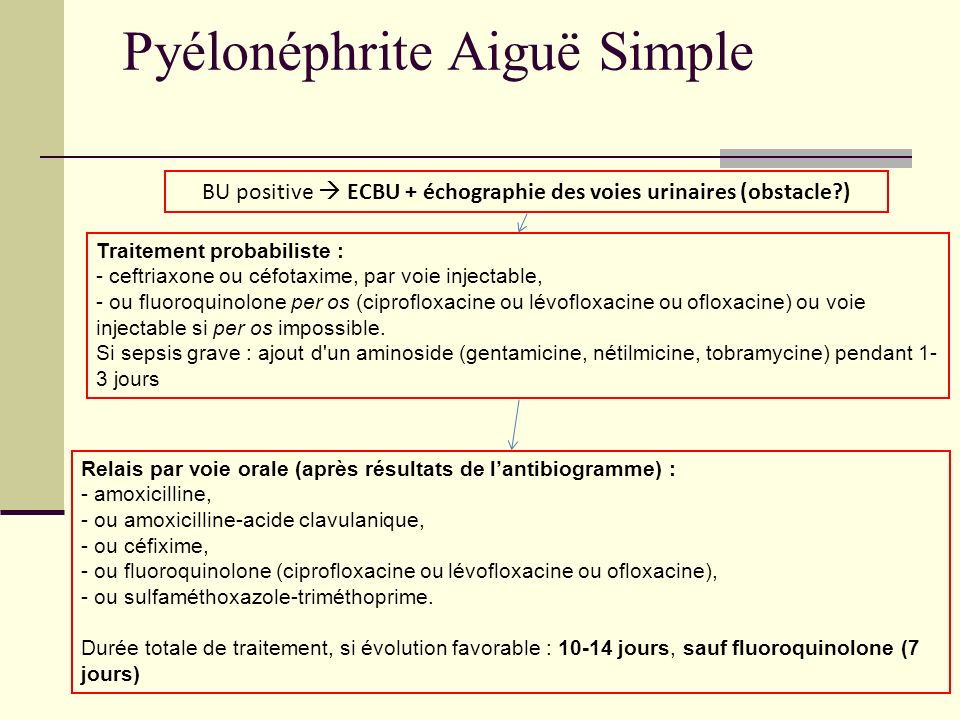 Pyélonéphrite Aiguë Simple