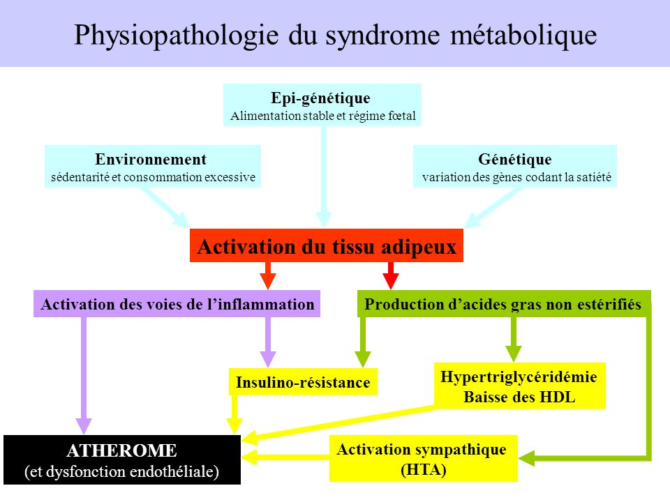 Physiopathologie du syndrome métabolique
