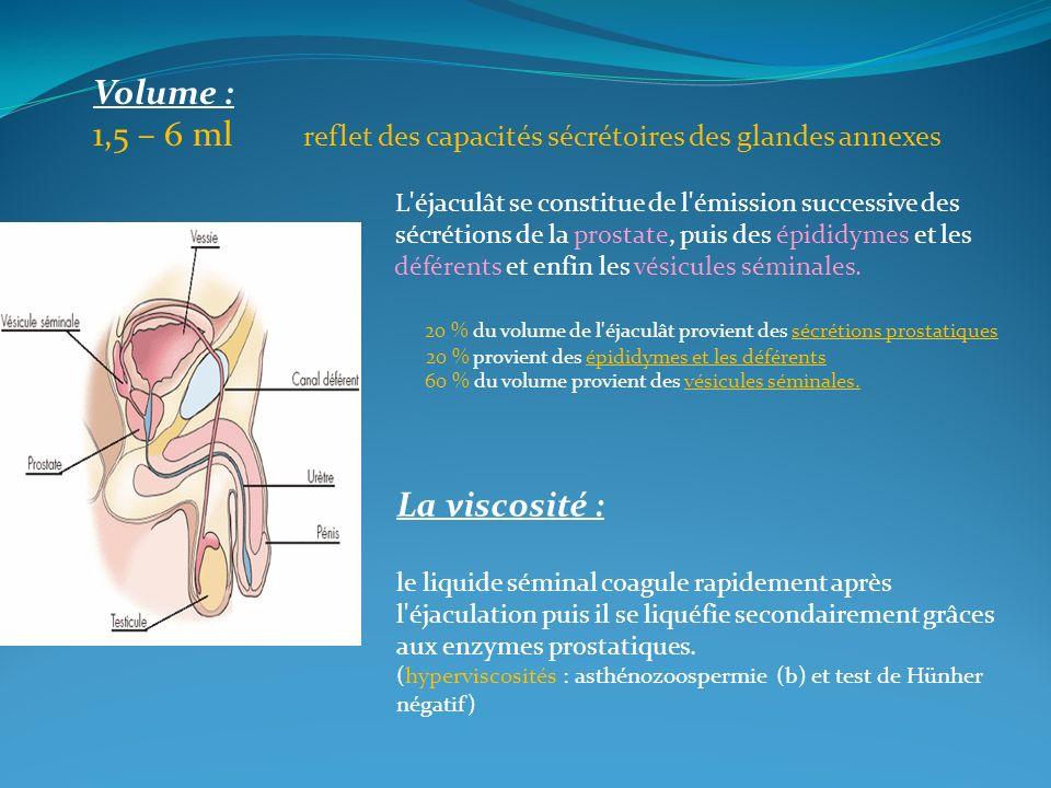 1,5 – 6 ml reflet des capacités sécrétoires des glandes annexes
