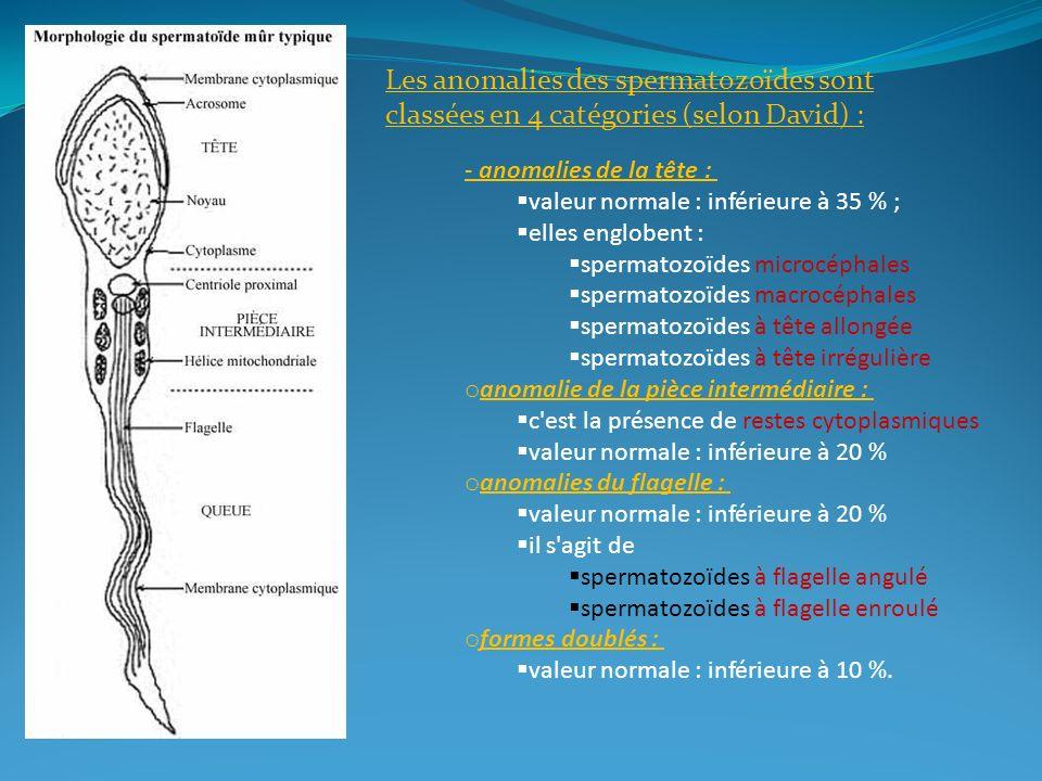Les anomalies des spermatozoïdes sont classées en 4 catégories (selon David) :