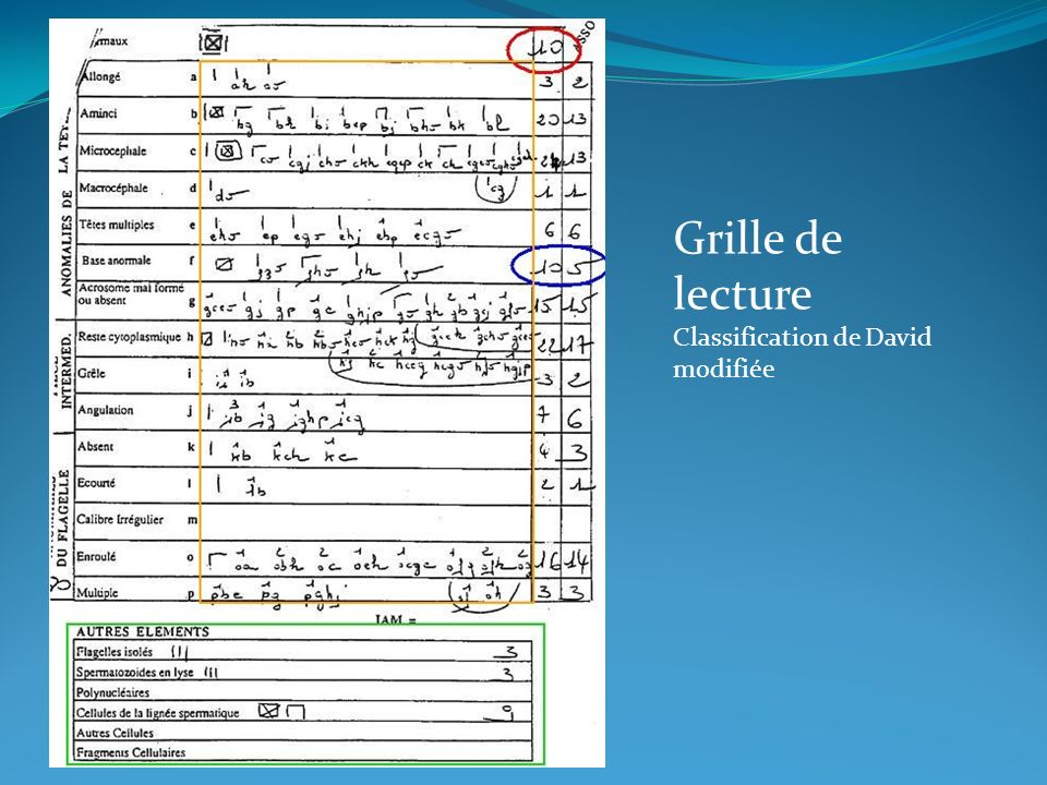 Grille de lecture Classification de David modifiée