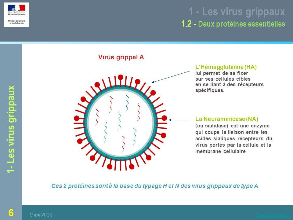 1 - Les virus grippaux 1.2 - Deux protéines essentielles