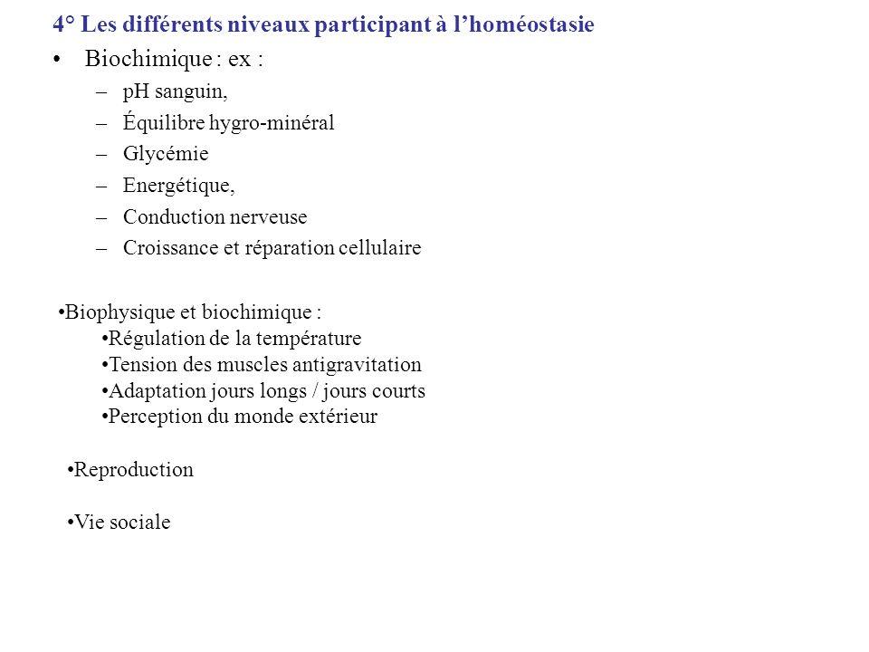 4° Les différents niveaux participant à l'homéostasie
