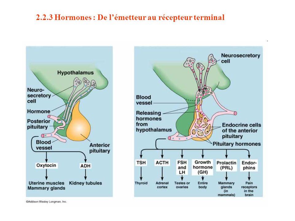 2.2.3 Hormones : De l'émetteur au récepteur terminal