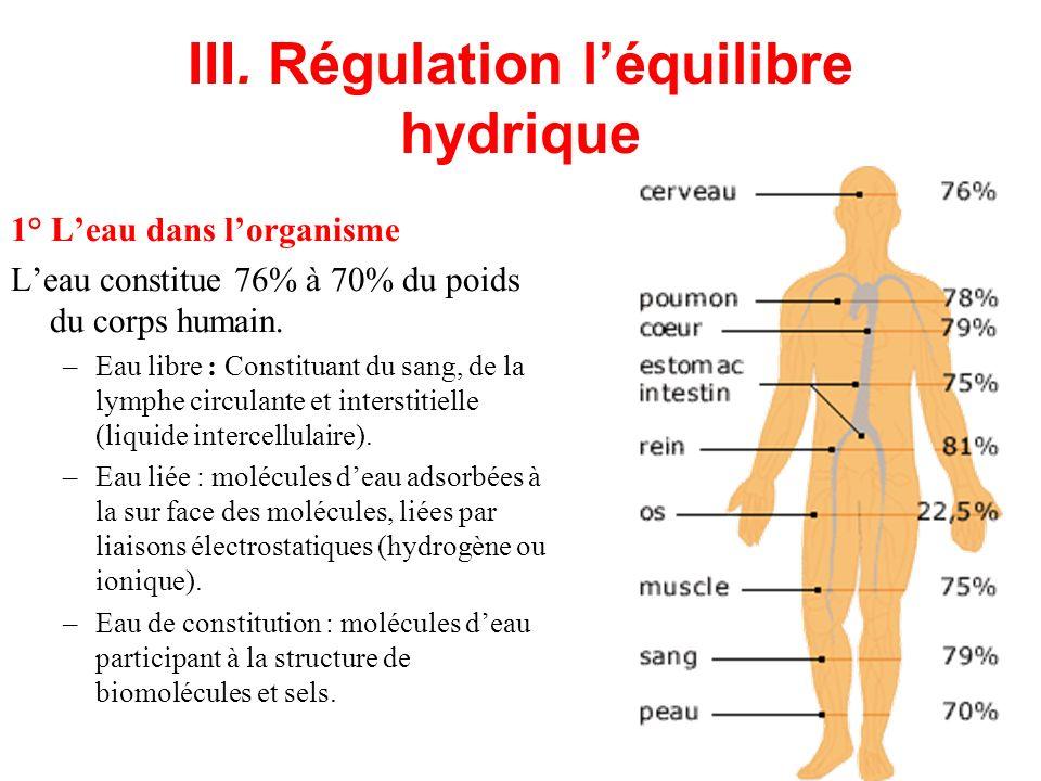 III. Régulation l'équilibre hydrique