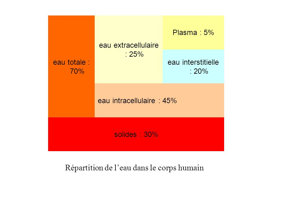 eau extracellulaire : 25%