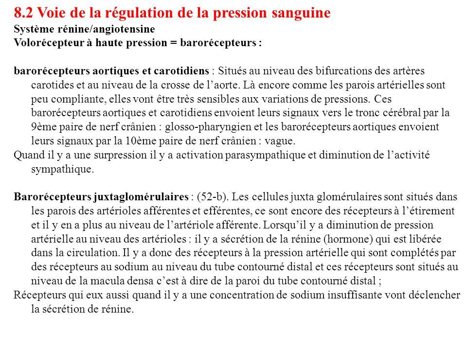 8.2 Voie de la régulation de la pression sanguine