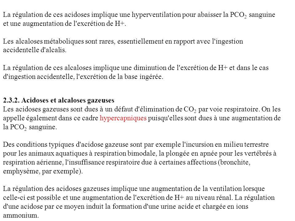 La régulation de ces acidoses implique une hyperventilation pour abaisser la PCO2 sanguine et une augmentation de l excrétion de H+.