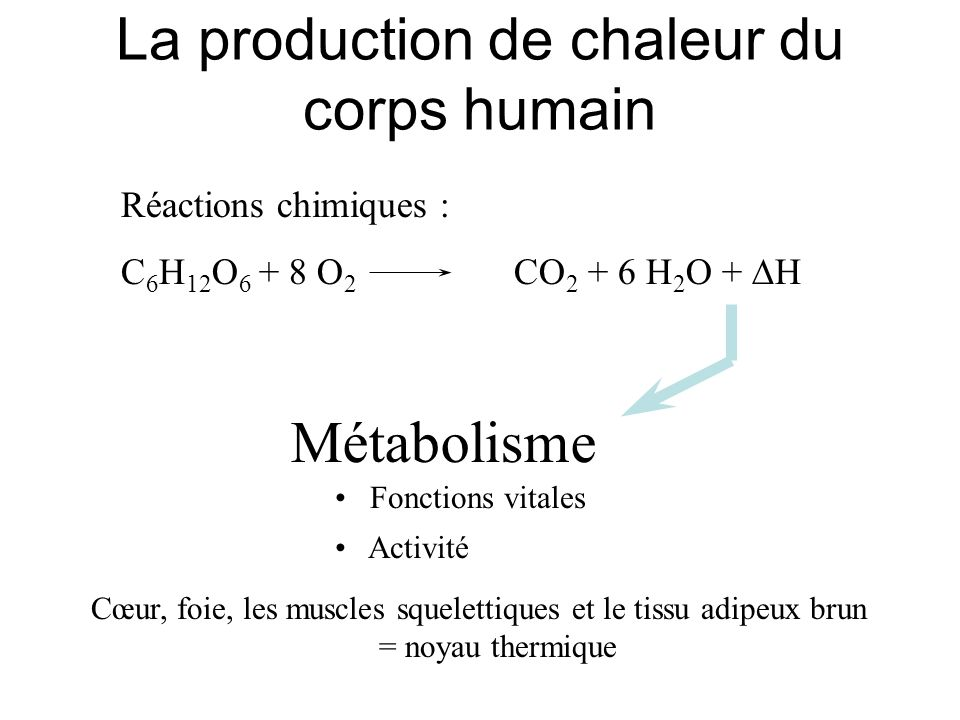 La production de chaleur du corps humain