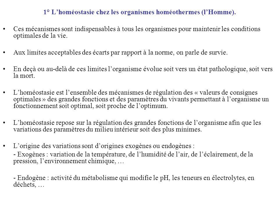 1° L'homéostasie chez les organismes homéothermes (l'Homme).