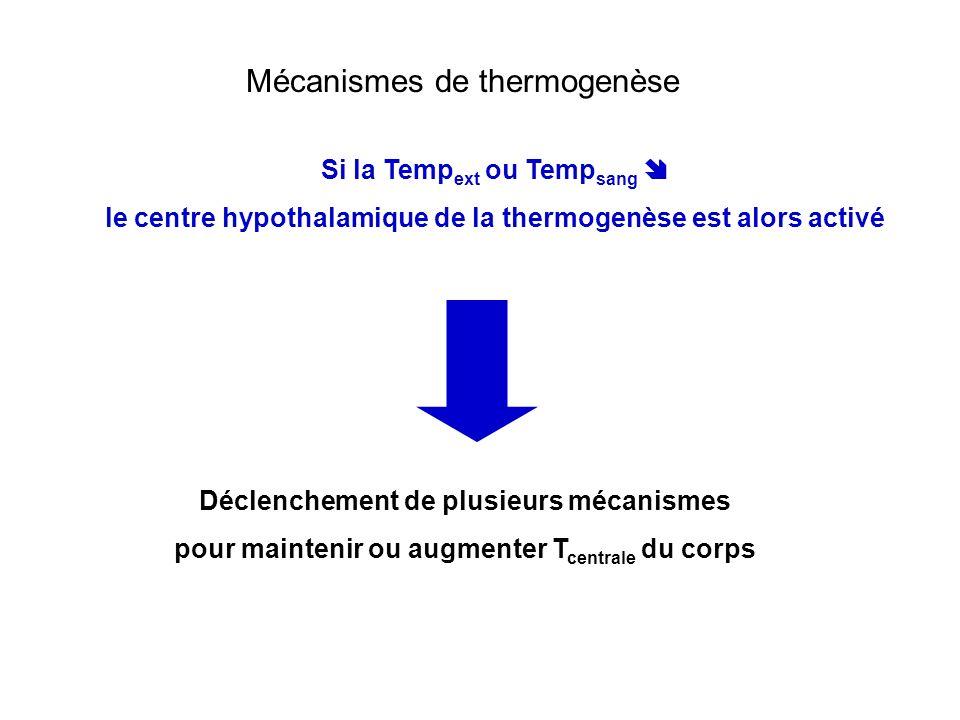 Mécanismes de thermogenèse