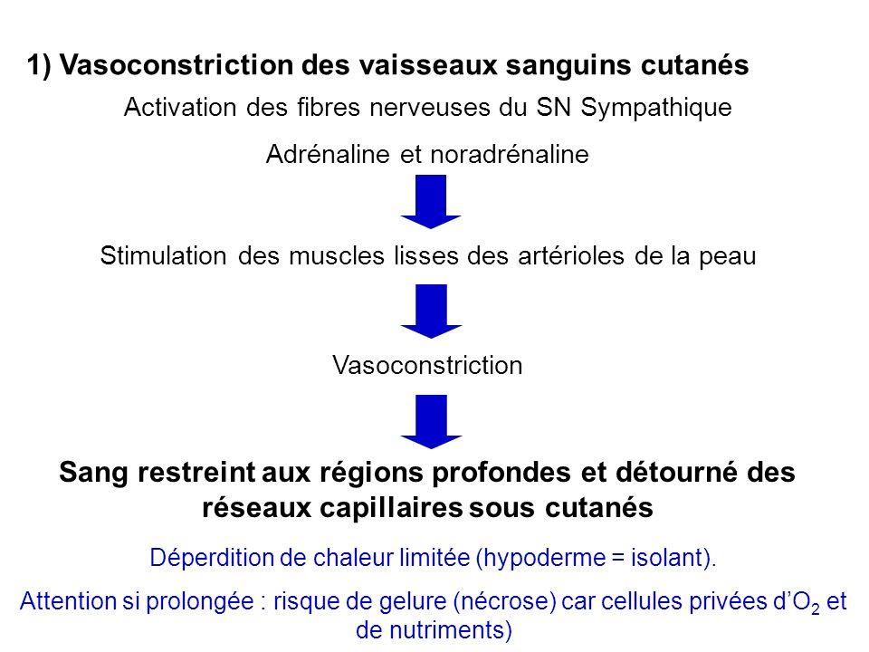 1) Vasoconstriction des vaisseaux sanguins cutanés