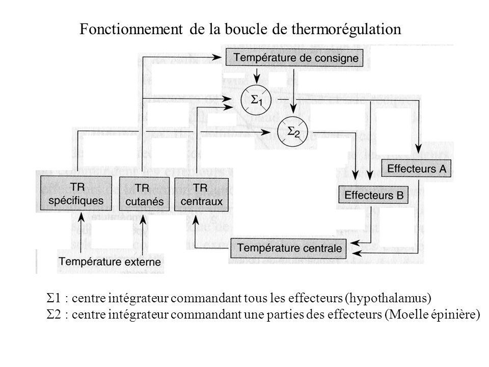 Fonctionnement de la boucle de thermorégulation