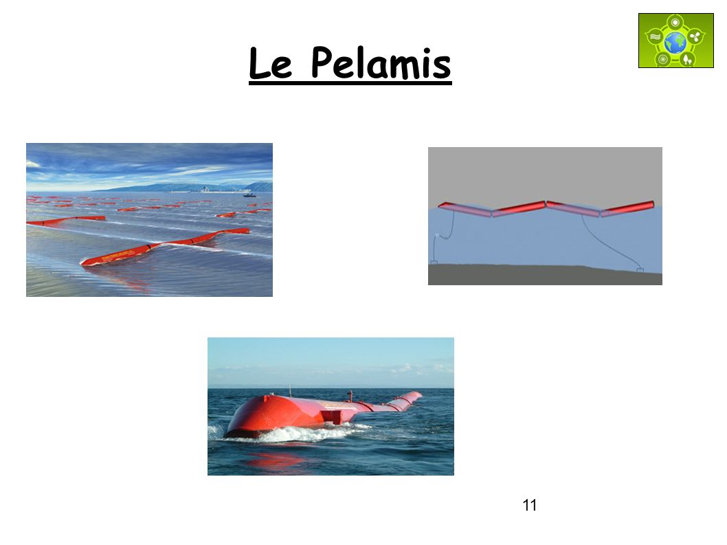 Le Pelamis