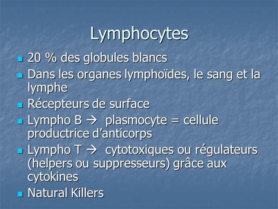 Lymphocytes 20 % des globules blancs