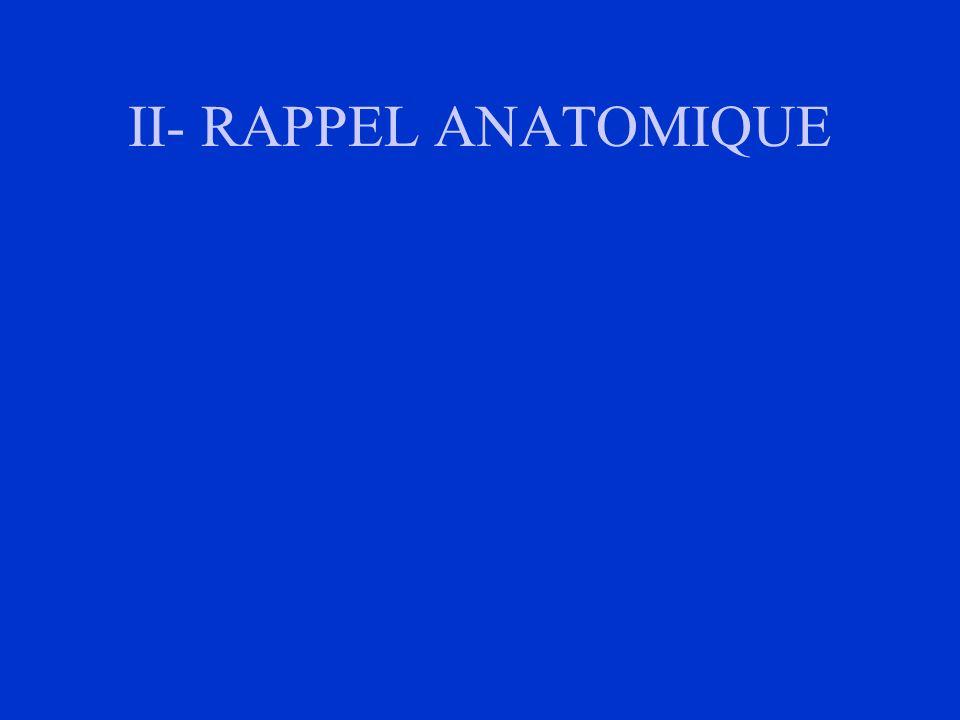 II- RAPPEL ANATOMIQUE