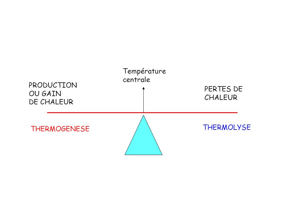 Température centrale PRODUCTION OU GAIN DE CHALEUR PERTES DE CHALEUR THERMOGENESE THERMOLYSE