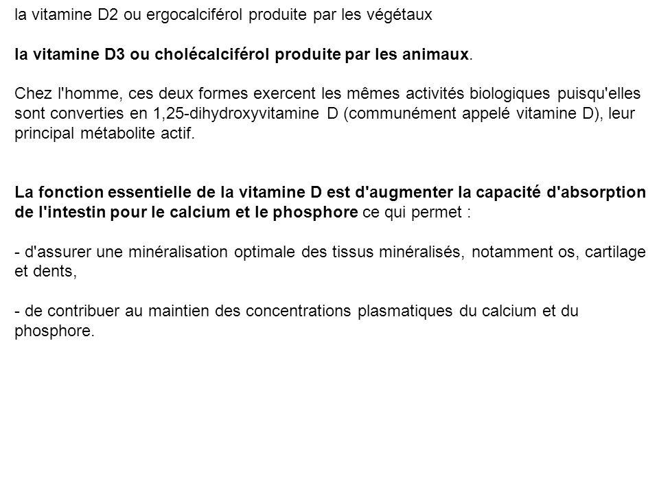 Deux formes de vitamine D existent :