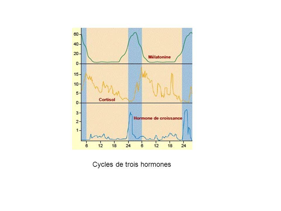 Cycles de trois hormones