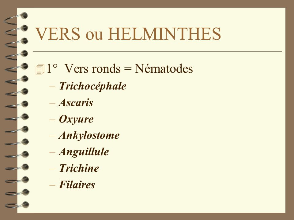 VERS ou HELMINTHES 1° Vers ronds = Nématodes Trichocéphale Ascaris