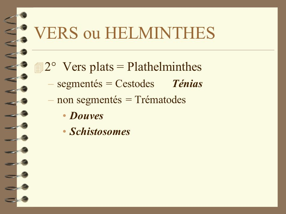 VERS ou HELMINTHES 2° Vers plats = Plathelminthes