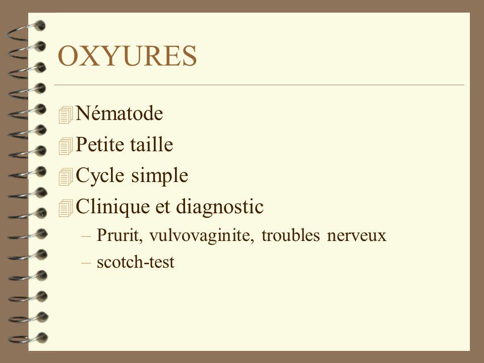 OXYURES Nématode Petite taille Cycle simple Clinique et diagnostic