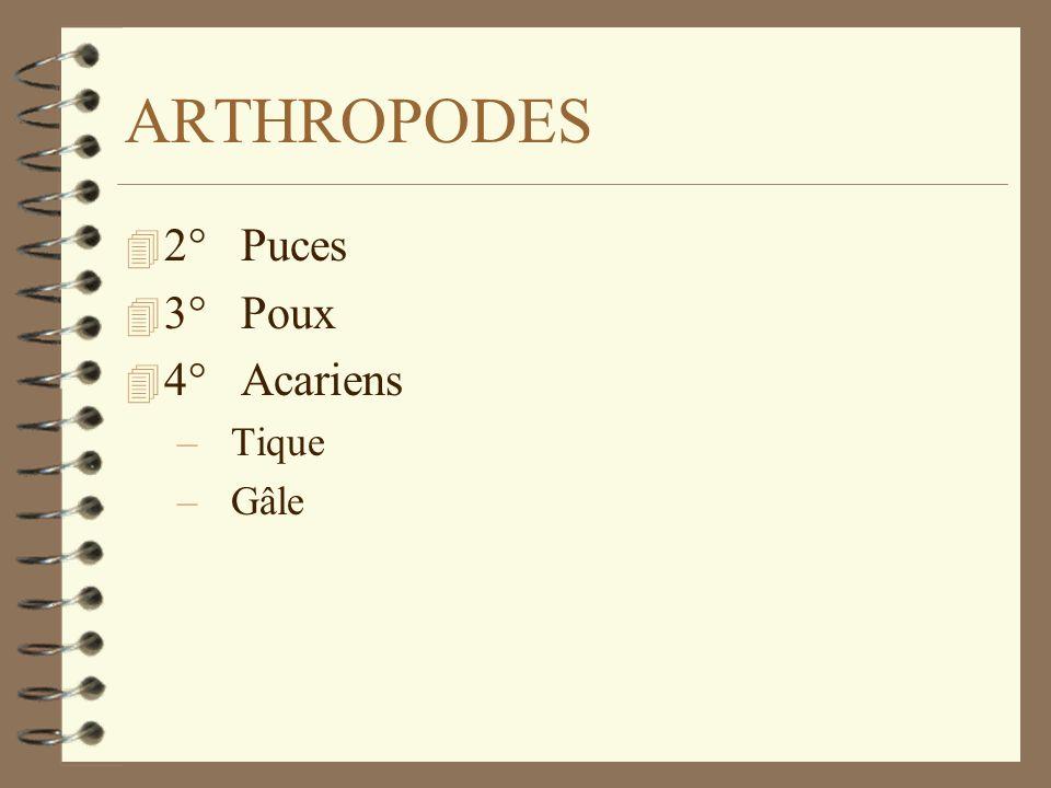 ARTHROPODES 2° Puces 3° Poux 4° Acariens Tique Gâle