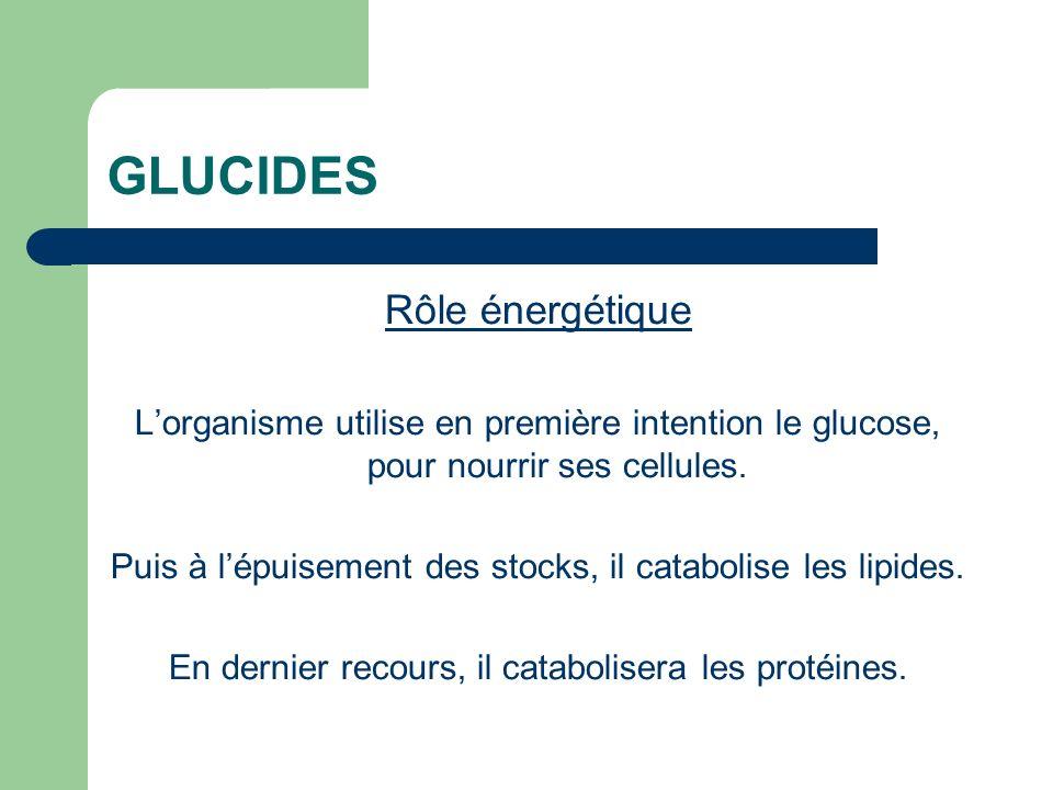 GLUCIDES Rôle énergétique