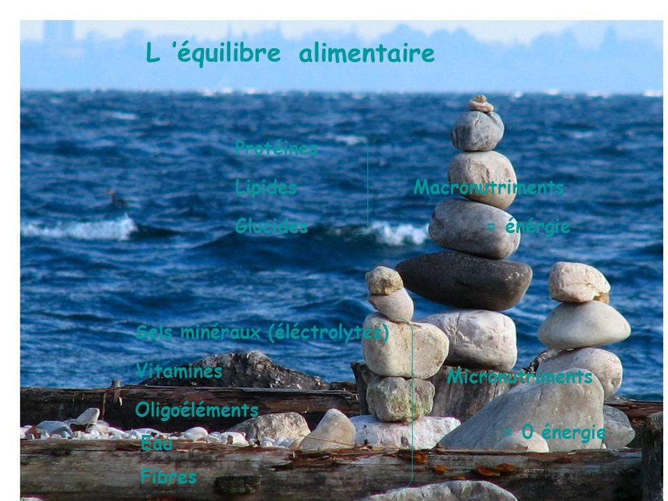 L 'équilibre alimentaire Protéines Lipides Macronutriments Glucides