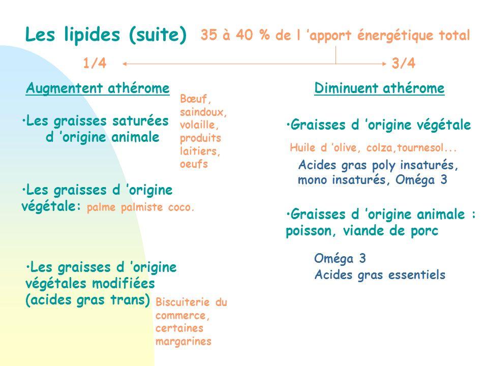 Les lipides (suite) 35 à 40 % de l 'apport énergétique total 1/4 3/4