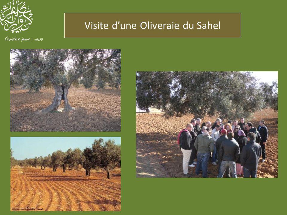 Visite d'une Oliveraie du Sahel