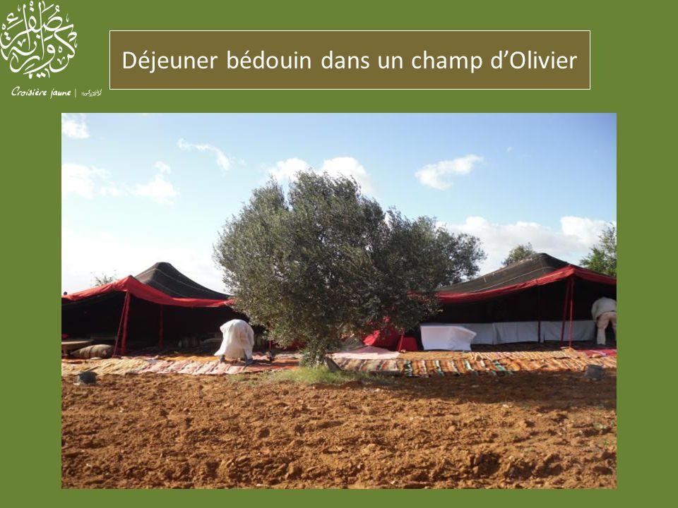 Déjeuner bédouin dans un champ d'Olivier