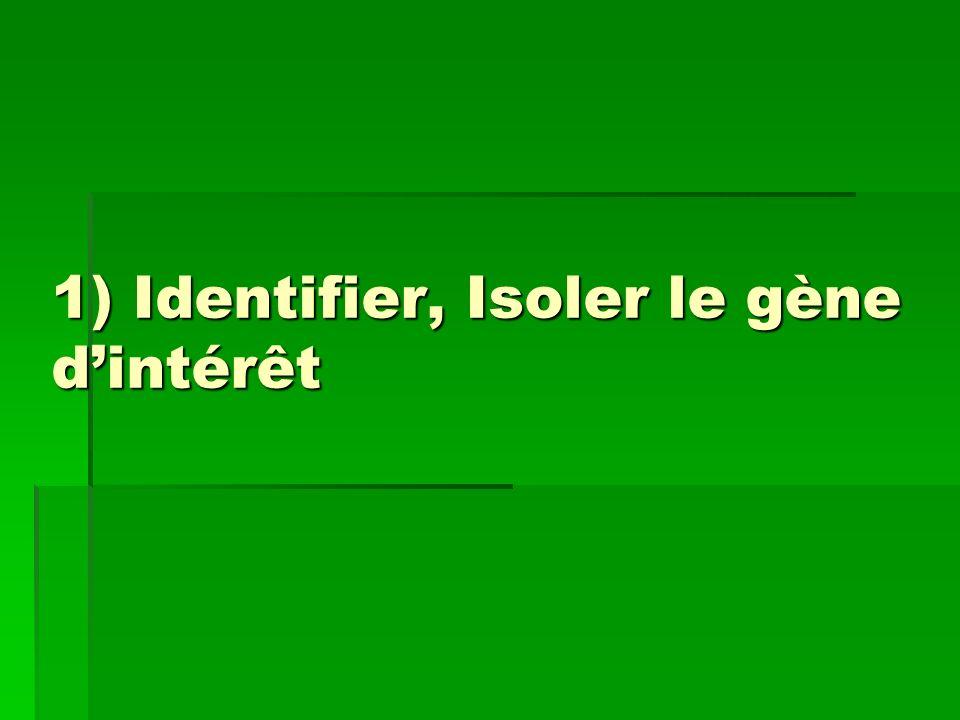 1) Identifier, Isoler le gène d'intérêt