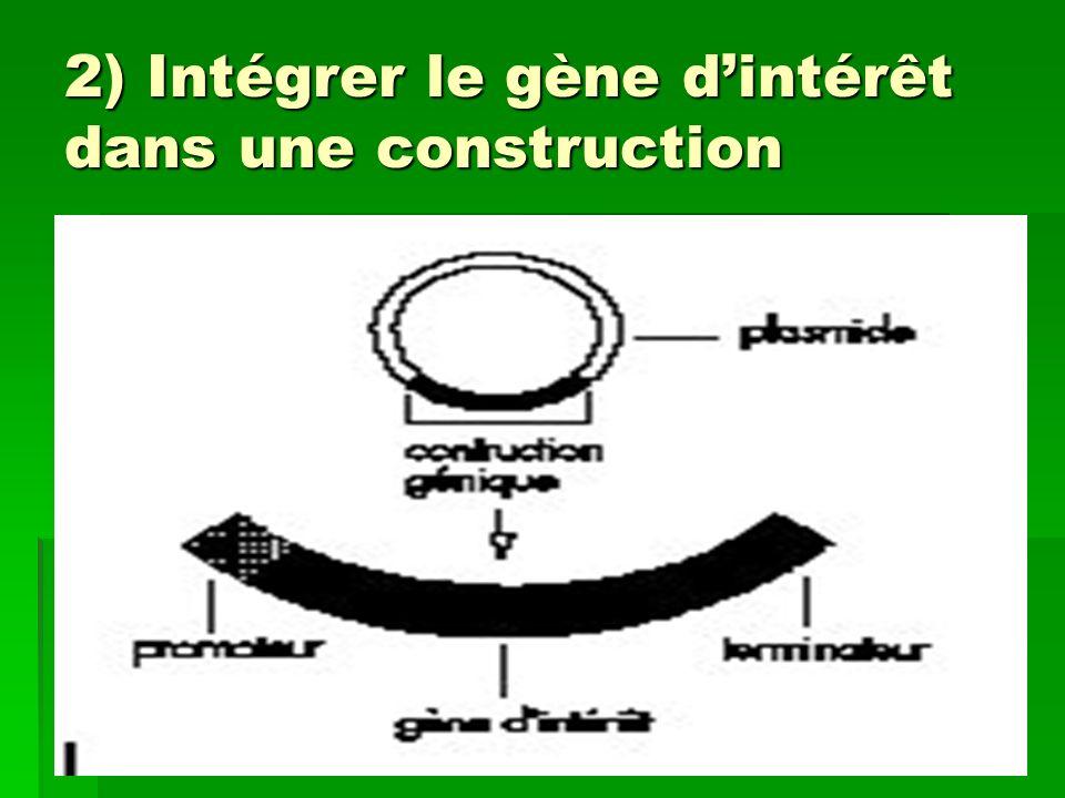 2) Intégrer le gène d'intérêt dans une construction