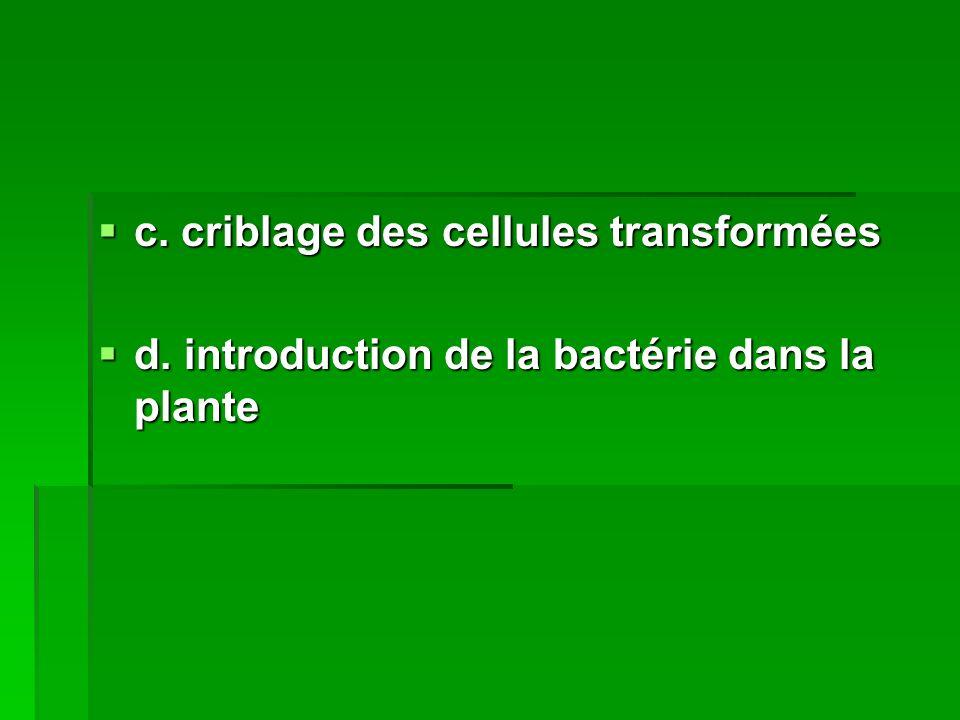 c. criblage des cellules transformées