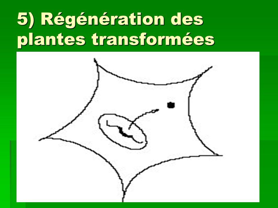 5) Régénération des plantes transformées