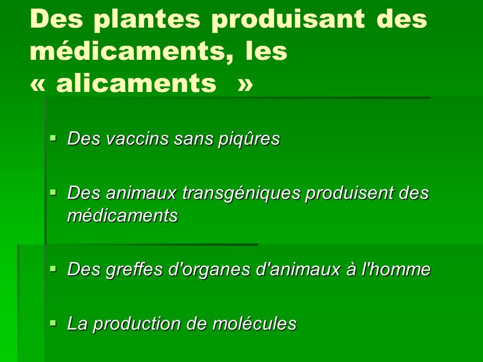 Des plantes produisant des médicaments, les « alicaments »