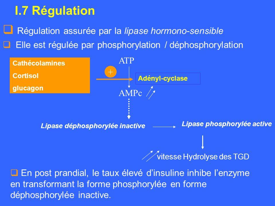 Régulation assurée par la lipase hormono-sensible